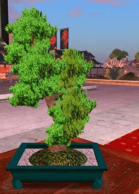 Le Bonsaï, ce merveilleux petit arbre et sa symbolique...